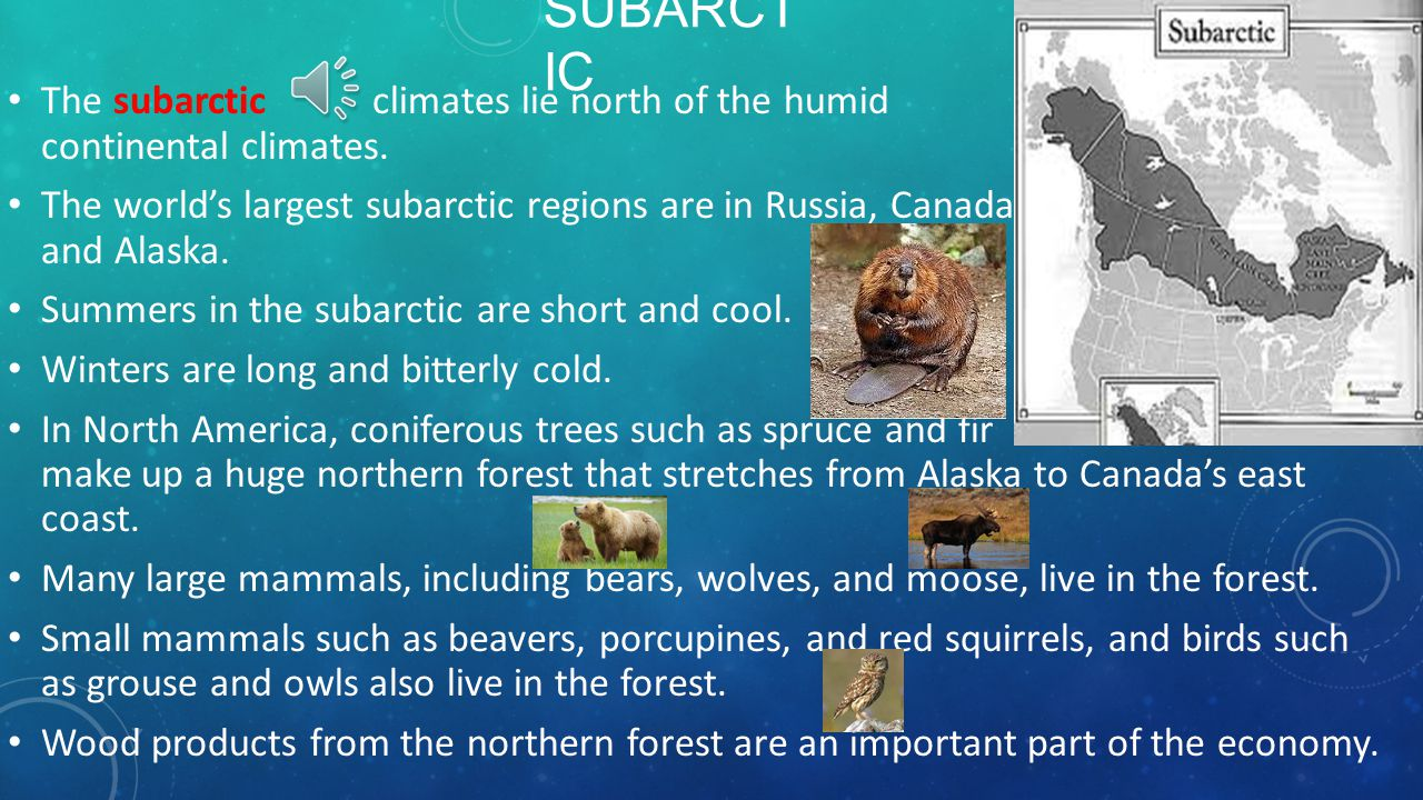Subarctic The subarctic climates lie north of the humid continental climates.