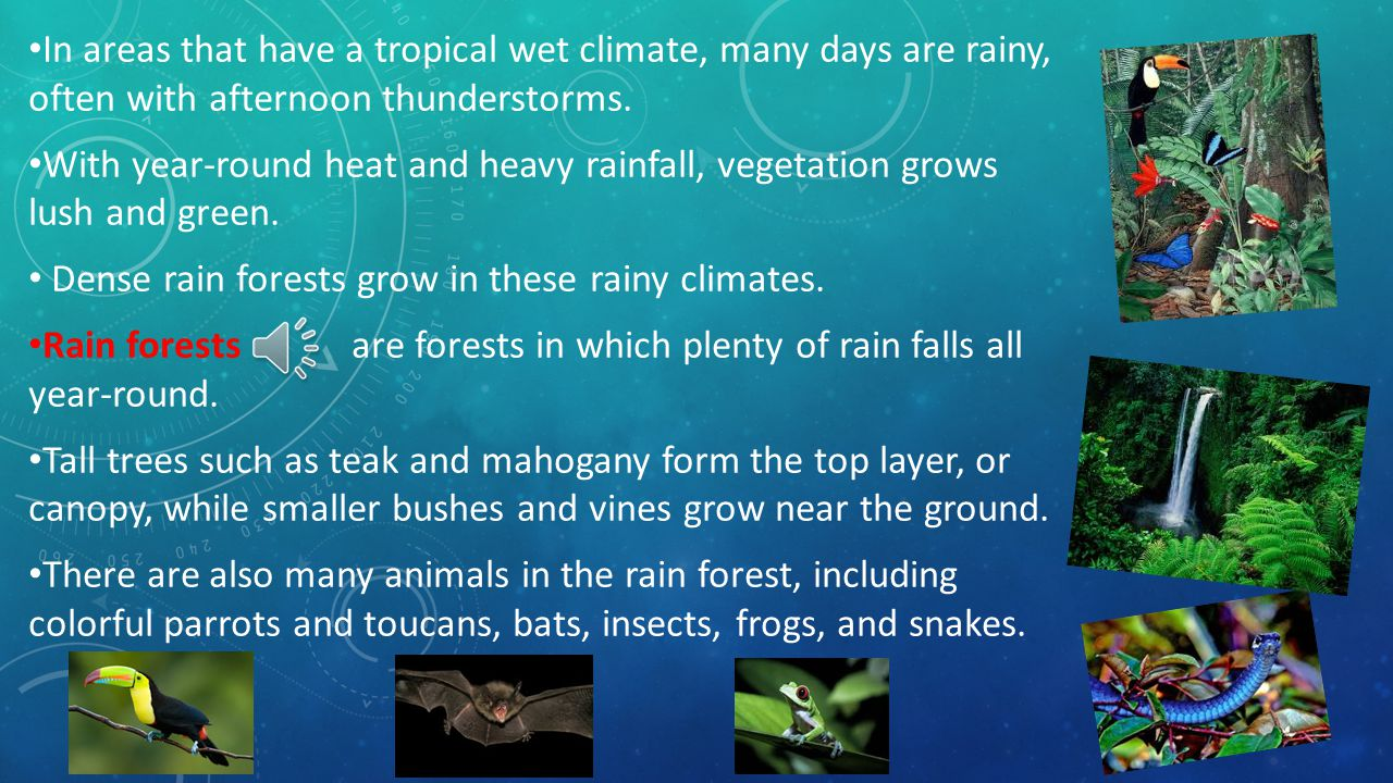 In areas that have a tropical wet climate, many days are rainy, often with afternoon thunderstorms.