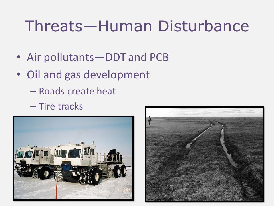 Threats—Human Disturbance