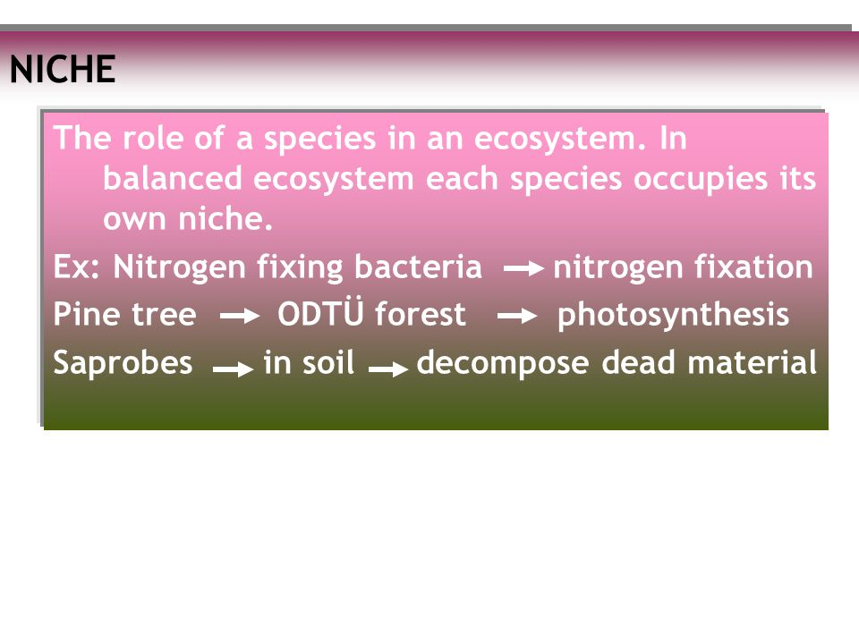 NICHE The role of a species in an ecosystem. In balanced ecosystem each species occupies its own niche.