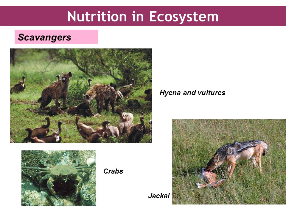 Nutrition in Ecosystem
