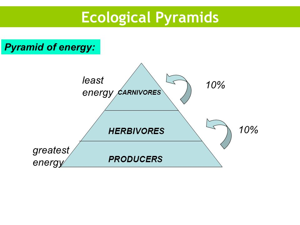 Ecological Pyramids Pyramid of energy: least energy 10% 10%