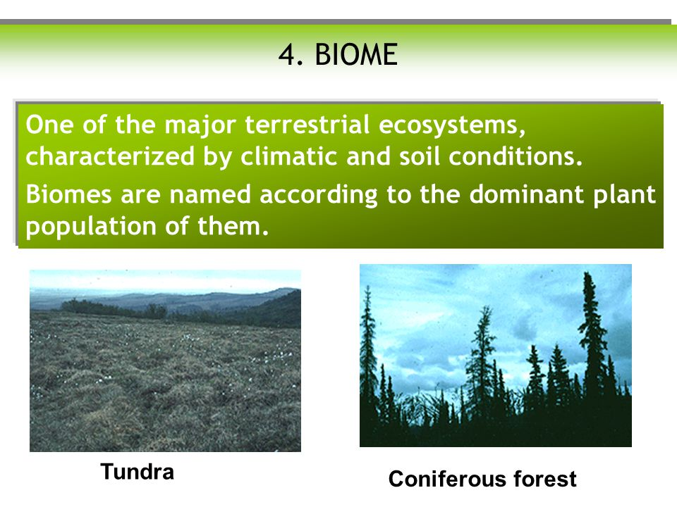 4. BIOME One of the major terrestrial ecosystems, characterized by climatic and soil conditions.