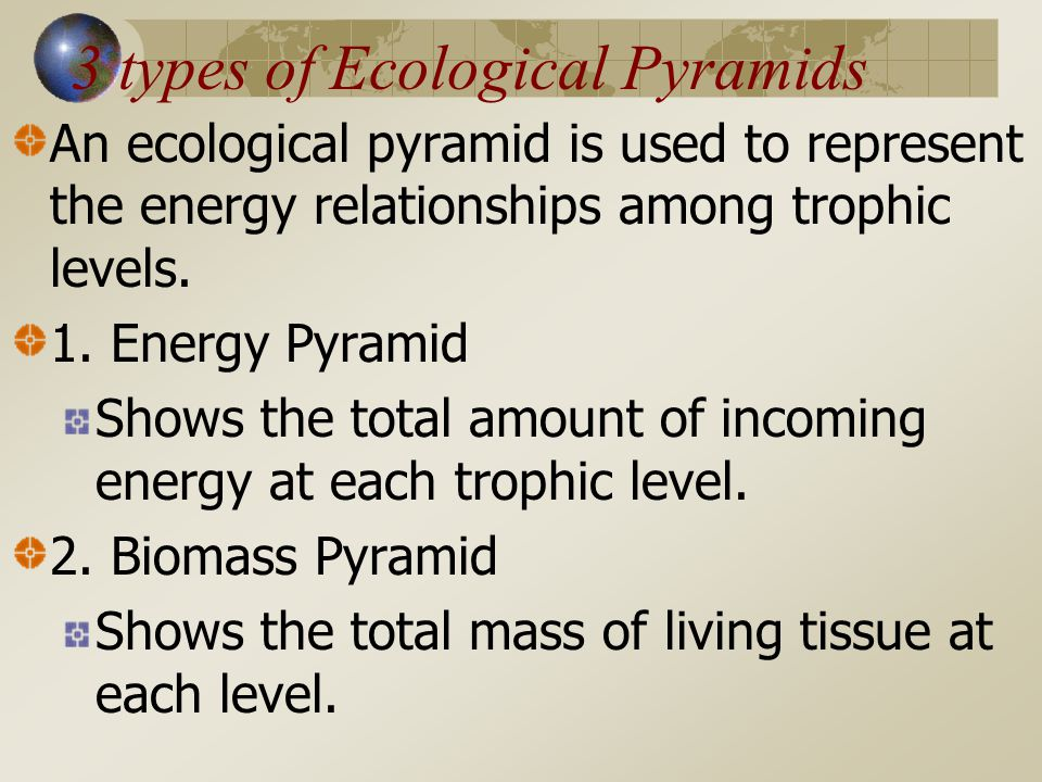 3 types of Ecological Pyramids