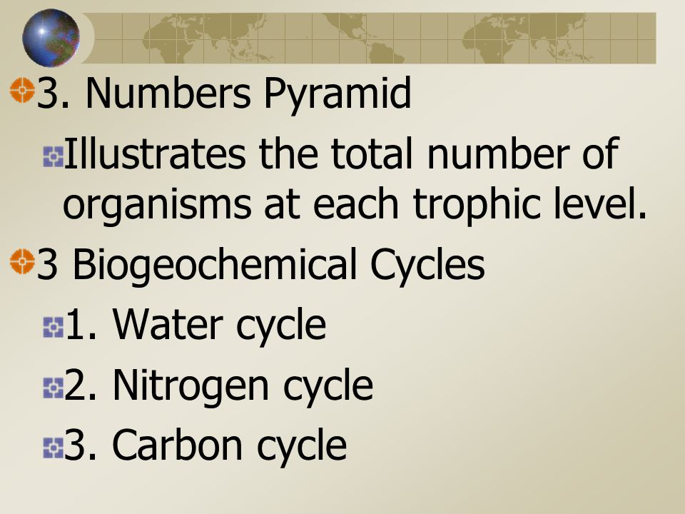 3. Numbers Pyramid Illustrates the total number of organisms at each trophic level. 3 Biogeochemical Cycles.