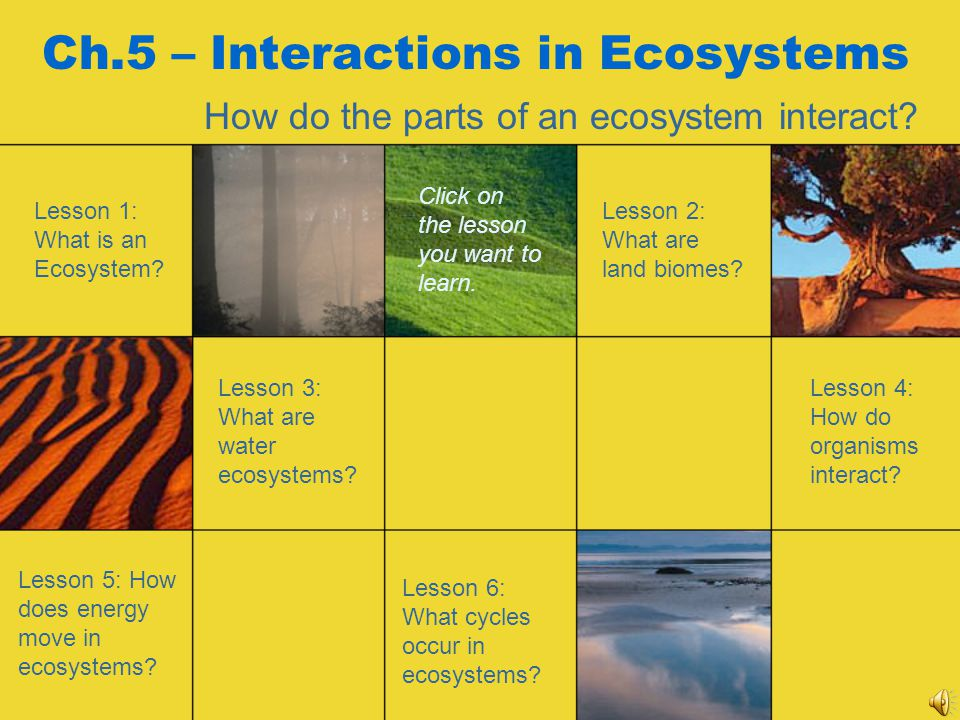 Ch.5 – Interactions in Ecosystems
