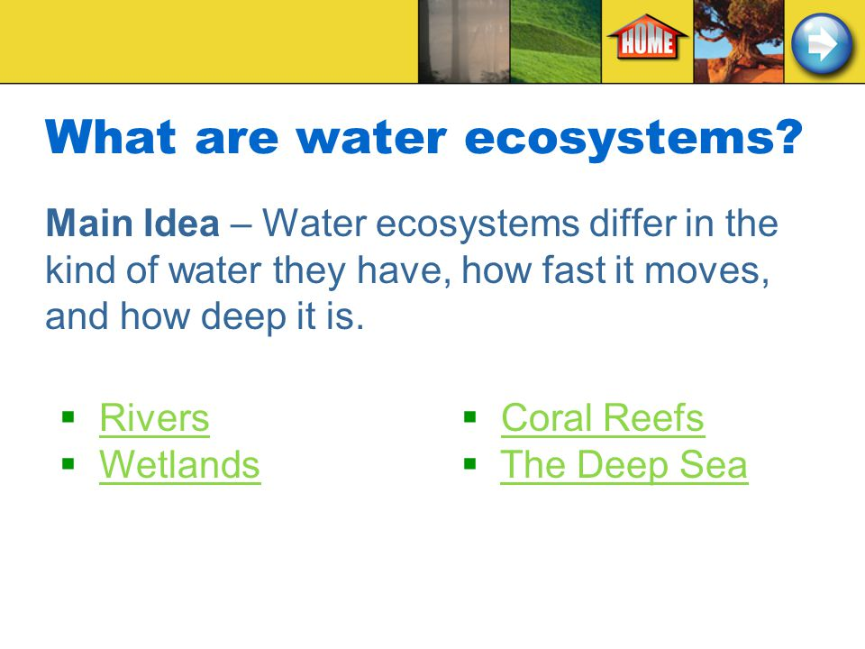What are water ecosystems