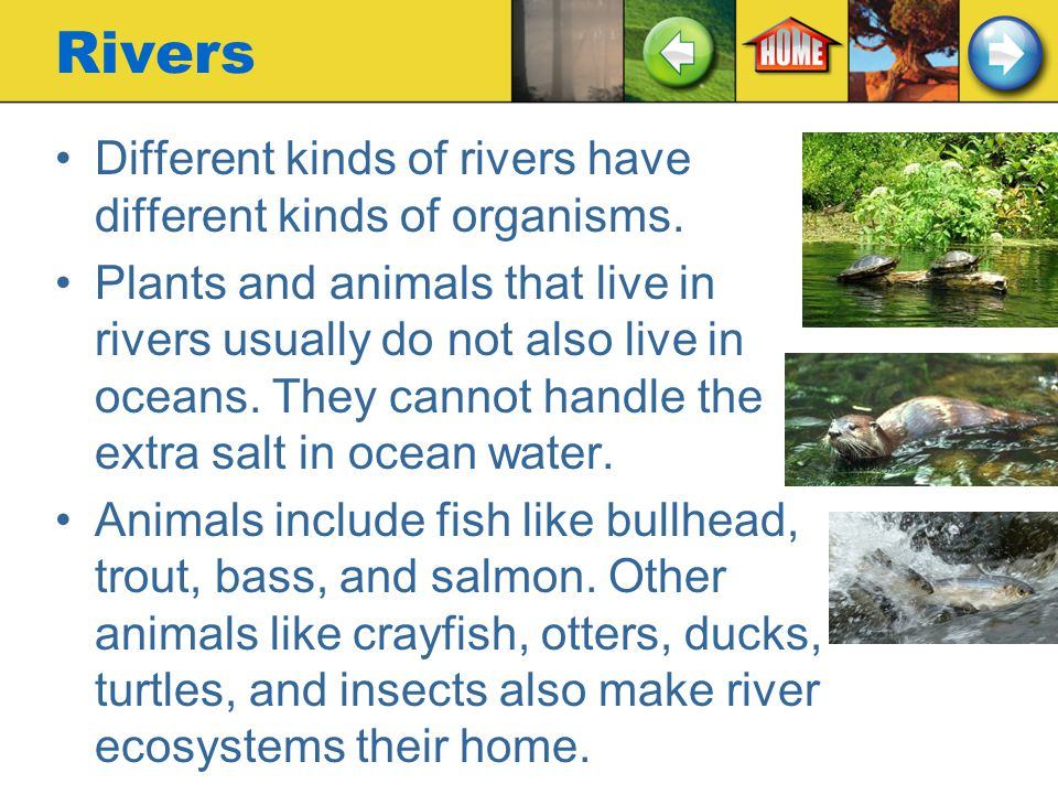 Rivers Different kinds of rivers have different kinds of organisms.