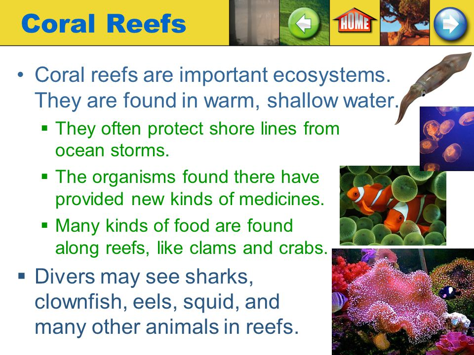 Coral Reefs Coral reefs are important ecosystems. They are found in warm, shallow water. They often protect shore lines from ocean storms.