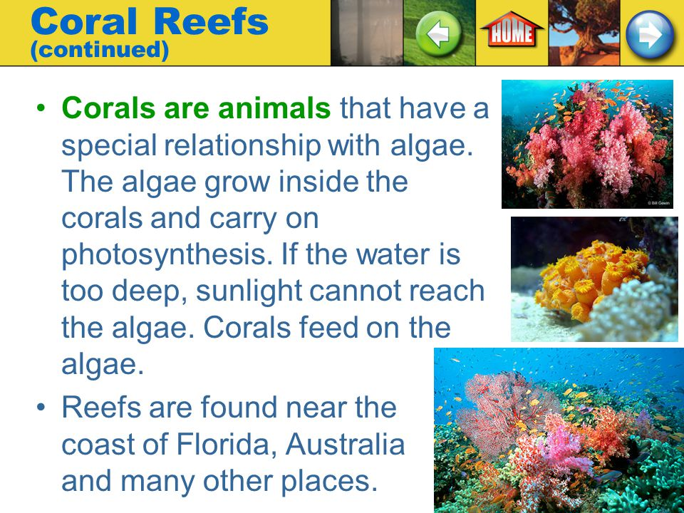 Coral Reefs (continued)