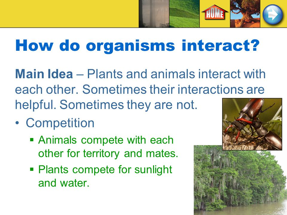 How do organisms interact