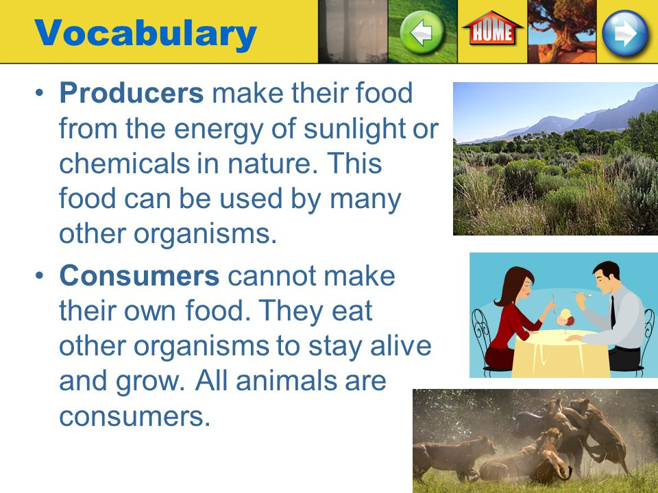 Vocabulary Producers make their food from the energy of sunlight or chemicals in nature. This food can be used by many other organisms.