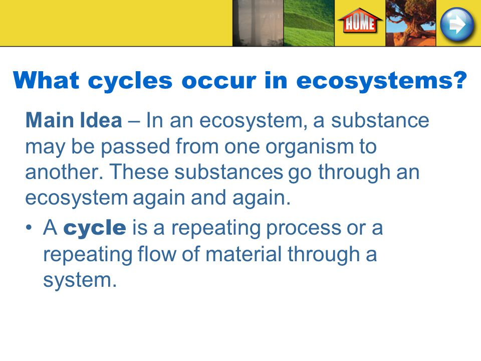 What cycles occur in ecosystems