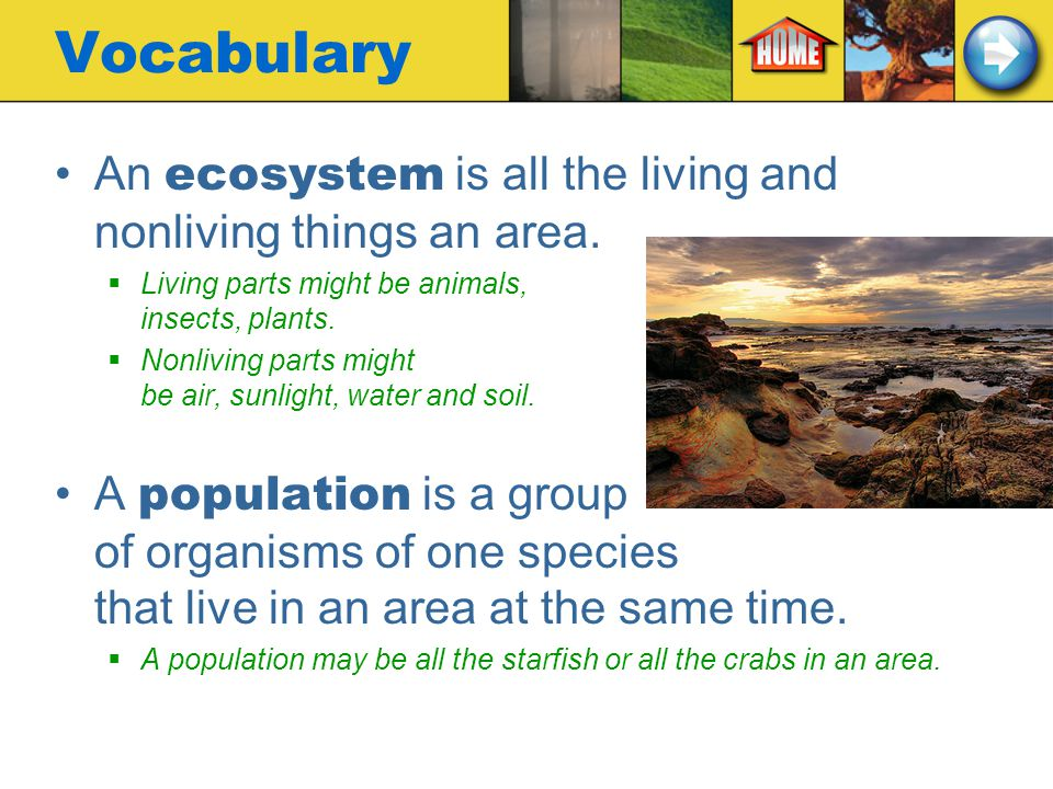 Vocabulary An ecosystem is all the living and nonliving things an area. Living parts might be animals, insects, plants.