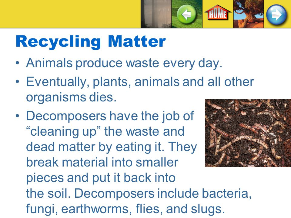 Recycling Matter Animals produce waste every day.