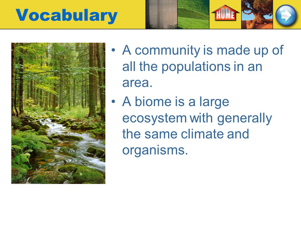 Vocabulary A community is made up of all the populations in an area.