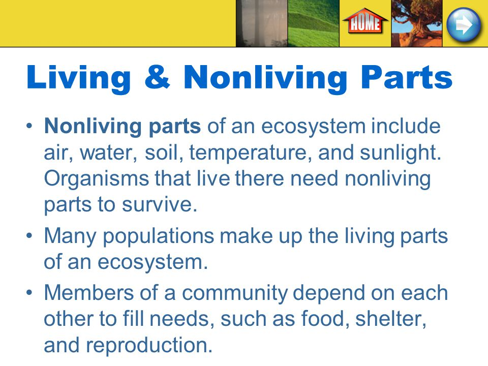 Living & Nonliving Parts