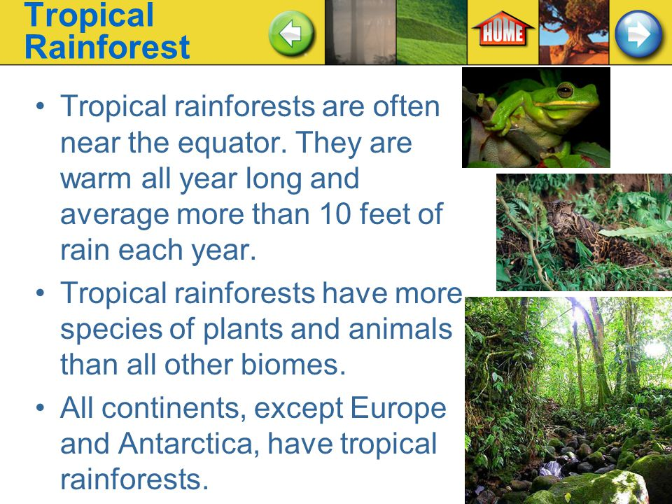 Tropical Rainforest Tropical rainforests are often near the equator. They are warm all year long and average more than 10 feet of rain each year.