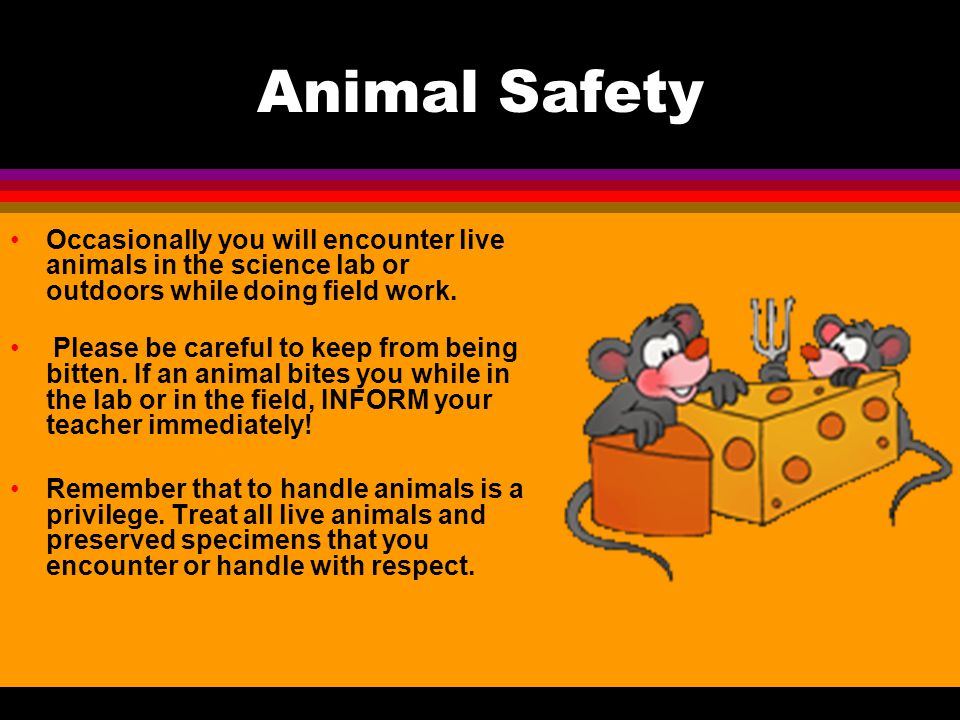 Animal Safety Occasionally you will encounter live animals in the science lab or outdoors while doing field work.