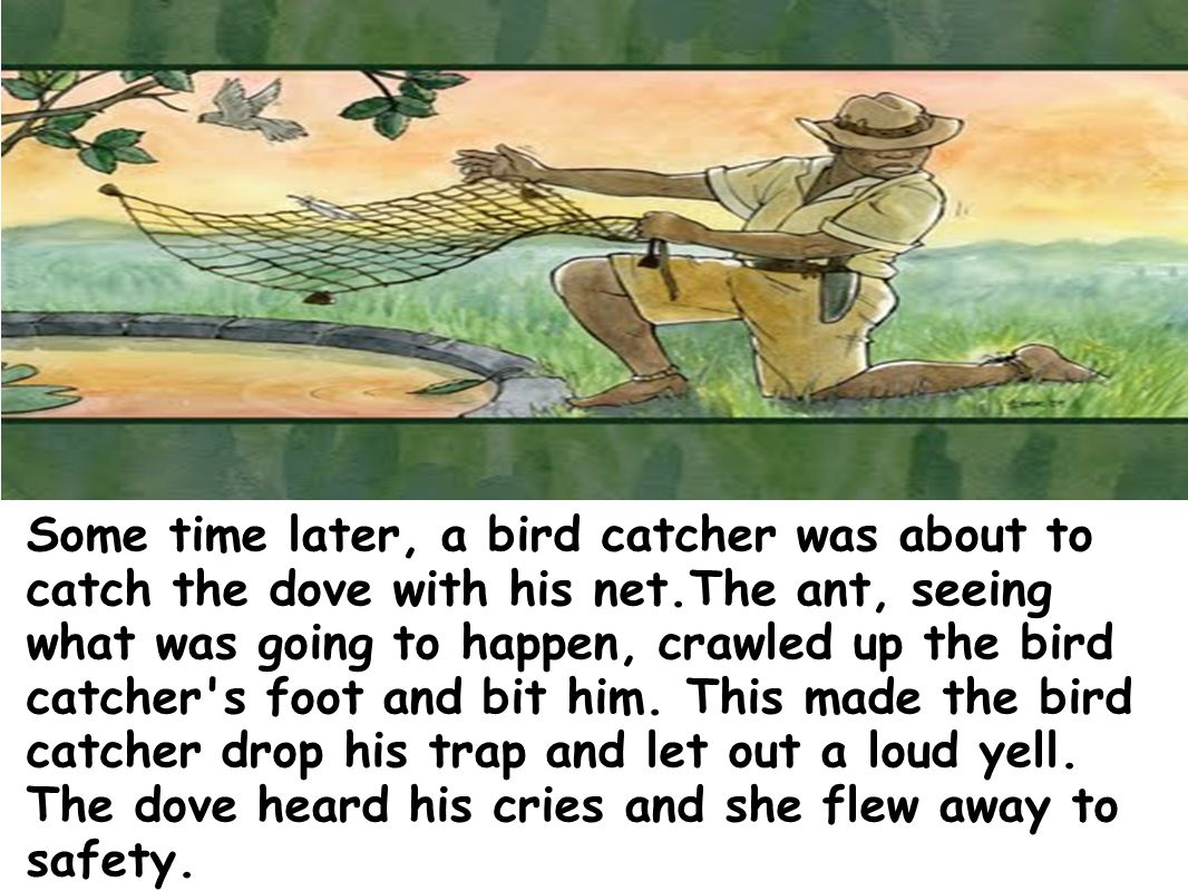 Some time later, a bird catcher was about to catch the dove with his net.The ant, seeing what was going to happen, crawled up the bird catcher s foot and bit him.