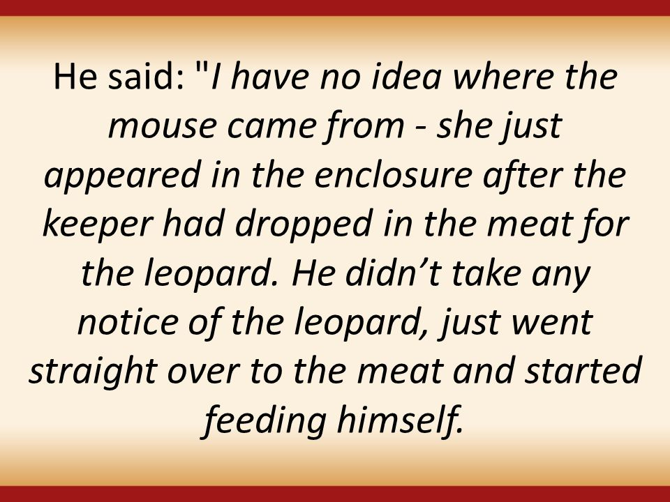 He said: I have no idea where the mouse came from - she just appeared in the enclosure after the keeper had dropped in the meat for the leopard.