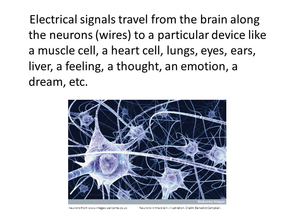 Electrical signals travel from the brain along the neurons (wires) to a particular device like a muscle cell, a heart cell, lungs, eyes, ears, liver, a feeling, a thought, an emotion, a dream, etc.