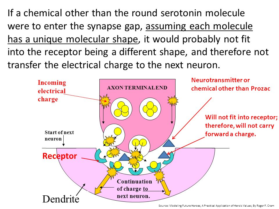 If a chemical other than the round serotonin molecule were to enter the synapse gap, assuming each molecule has a unique molecular shape, it would probably not fit into the receptor being a different shape, and therefore not transfer the electrical charge to the next neuron.