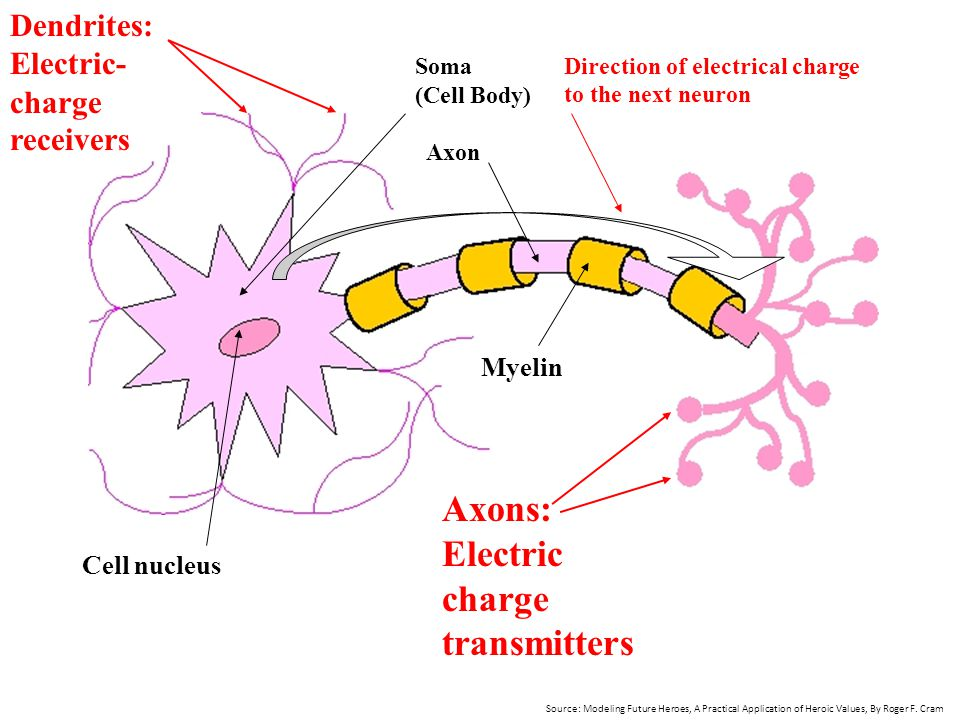 Axons: Electric charge transmitters