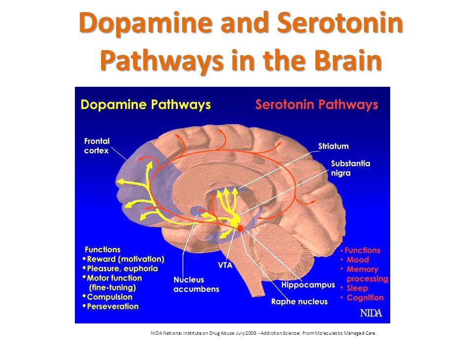 Dopamine and Serotonin