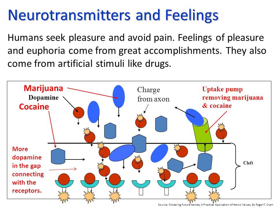 Neurotransmitters and Feelings Humans seek pleasure and avoid pain