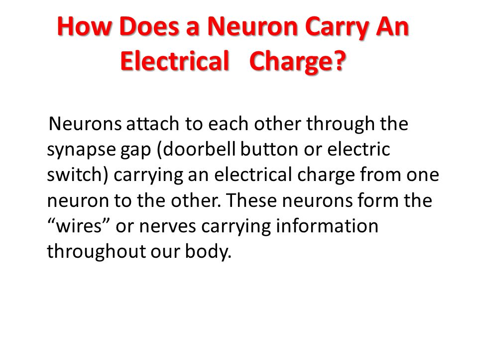 How Does a Neuron Carry An Electrical Charge