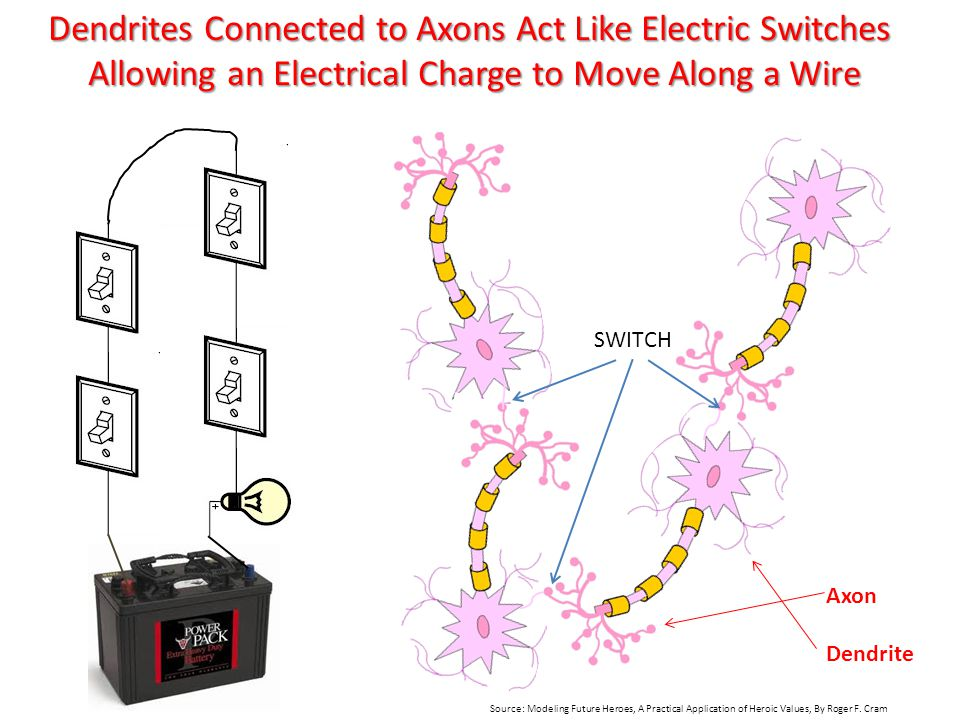 Dendrites Connected to Axons Act Like Electric Switches