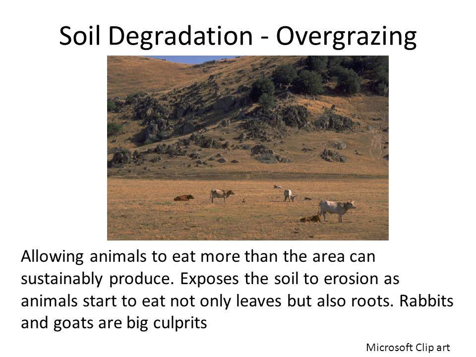 Soil Degradation - Overgrazing