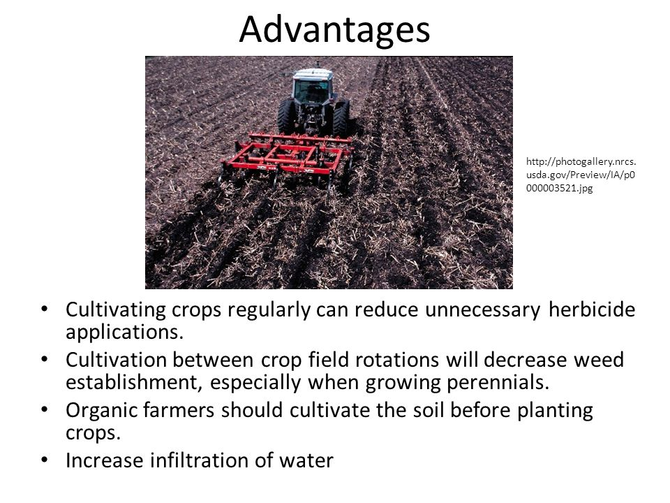 Advantages http://photogallery.nrcs.usda.gov/Preview/IA/p0000003521.jpg. Cultivating crops regularly can reduce unnecessary herbicide applications.