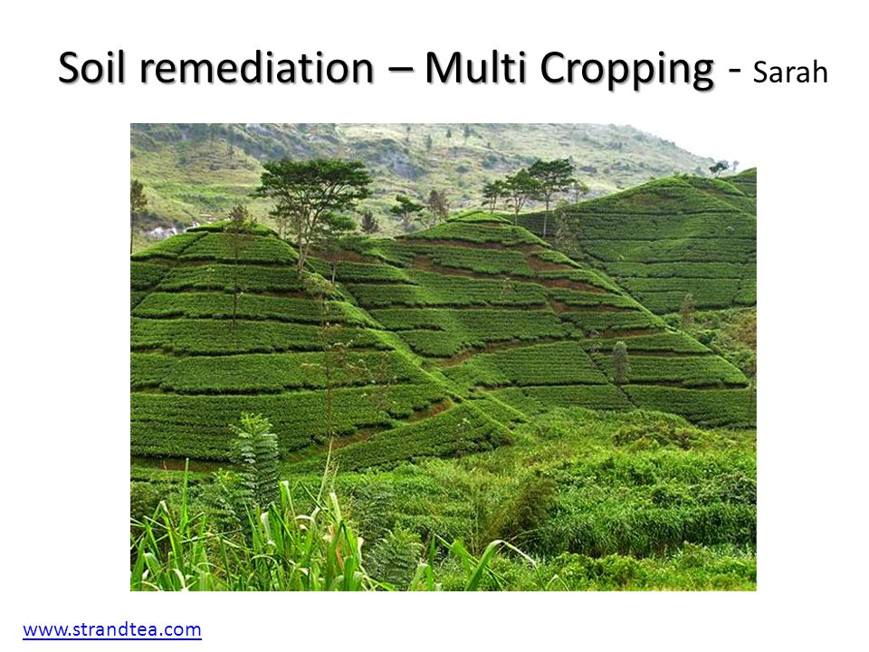 3 4 the soil system ppt video online download for Soil remediation