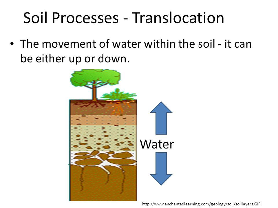 Soil Processes - Translocation