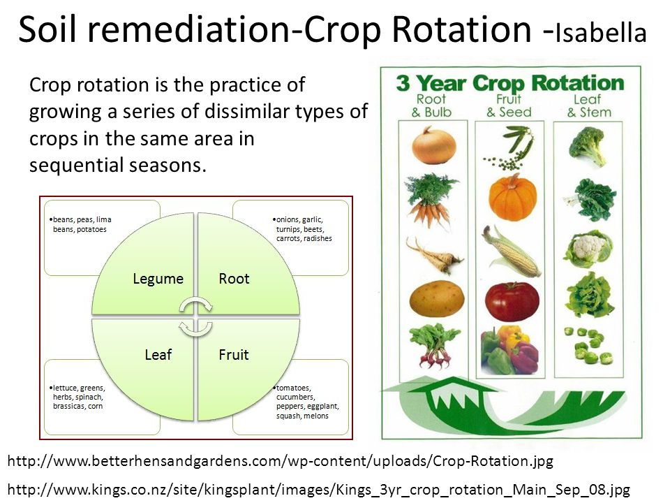 Soil remediation-Crop Rotation -Isabella