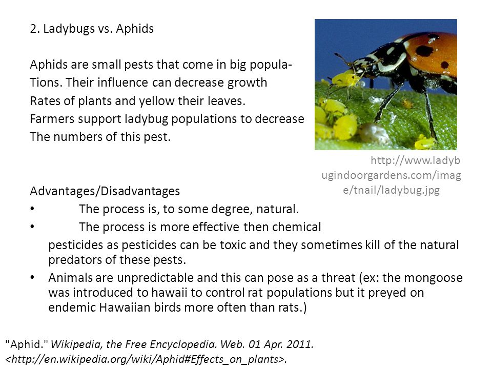 Aphids are small pests that come in big popula-