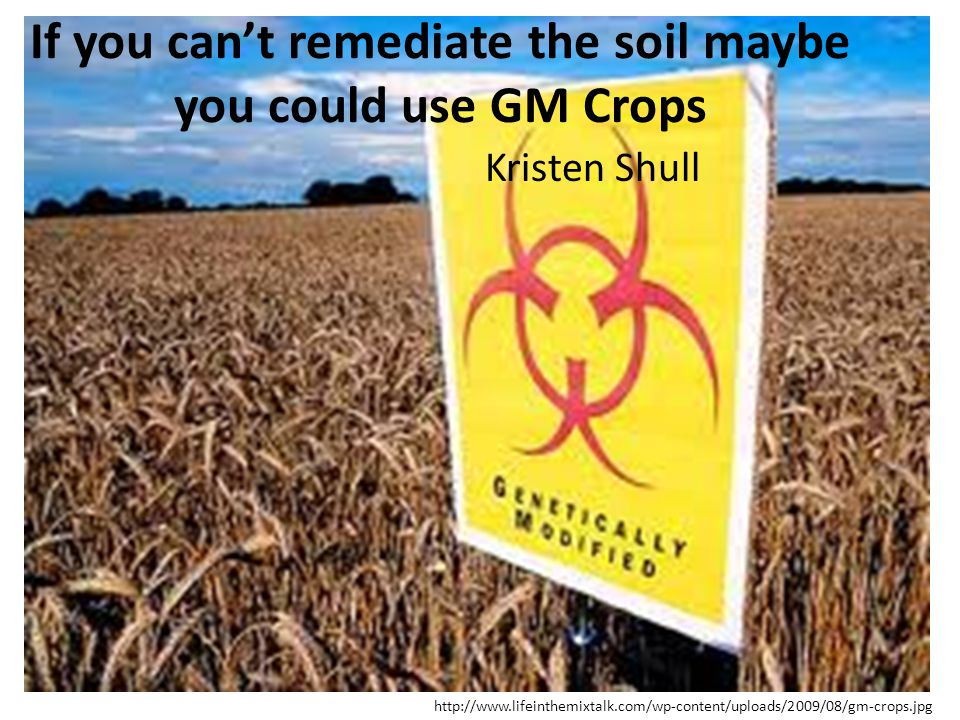 If you can't remediate the soil maybe you could use GM Crops
