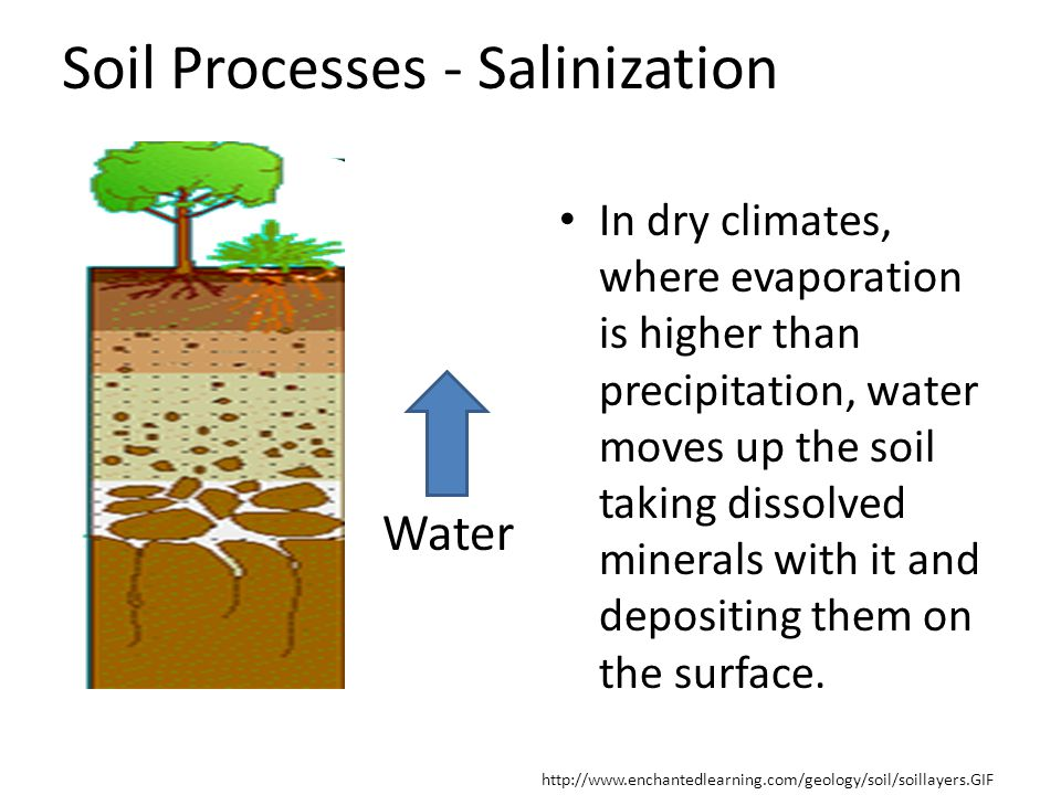 Soil Processes - Salinization
