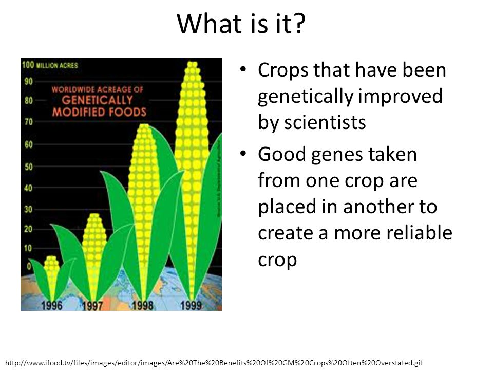 What is it Crops that have been genetically improved by scientists