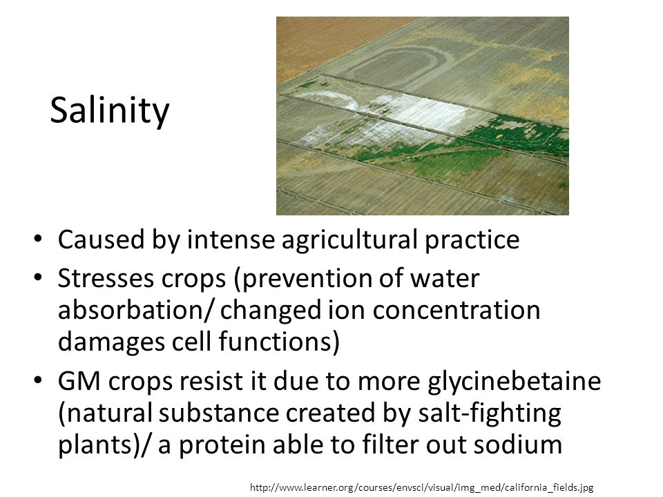 Salinity Caused by intense agricultural practice