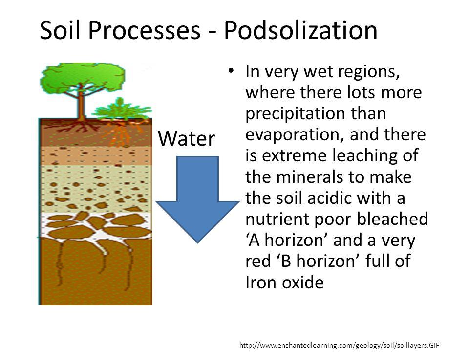 Soil Processes - Podsolization