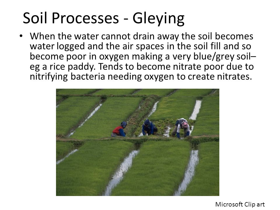 Soil Processes - Gleying