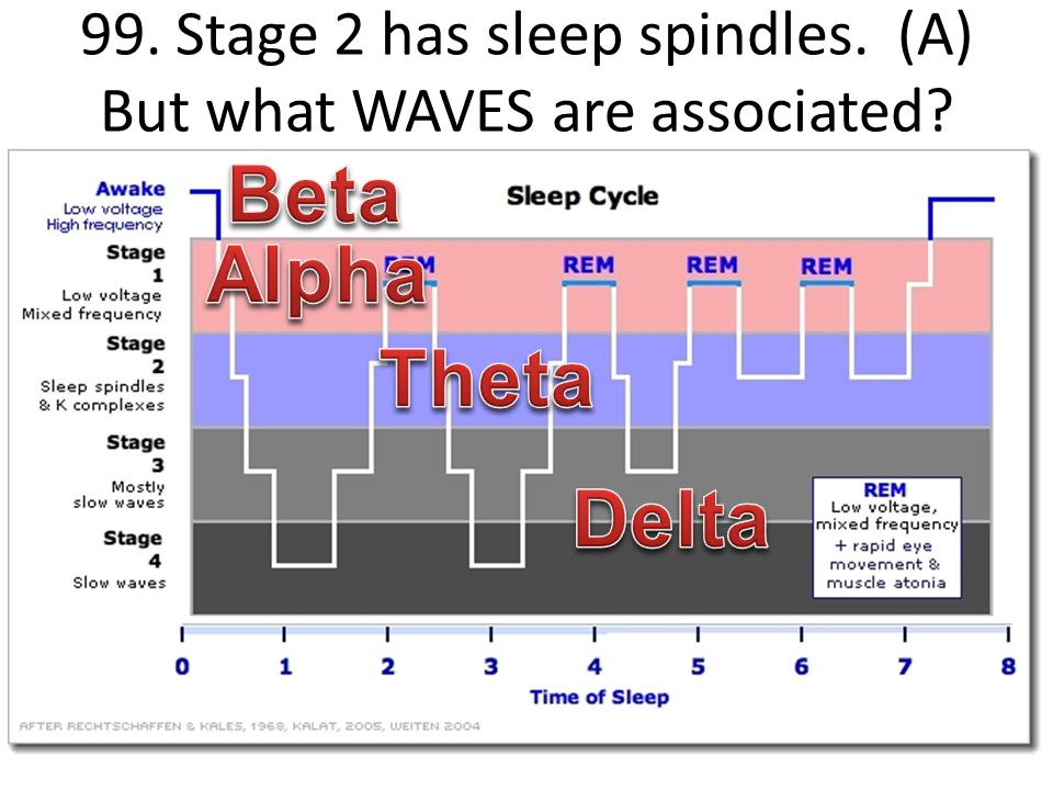 99. Stage 2 has sleep spindles. (A) But what WAVES are associated