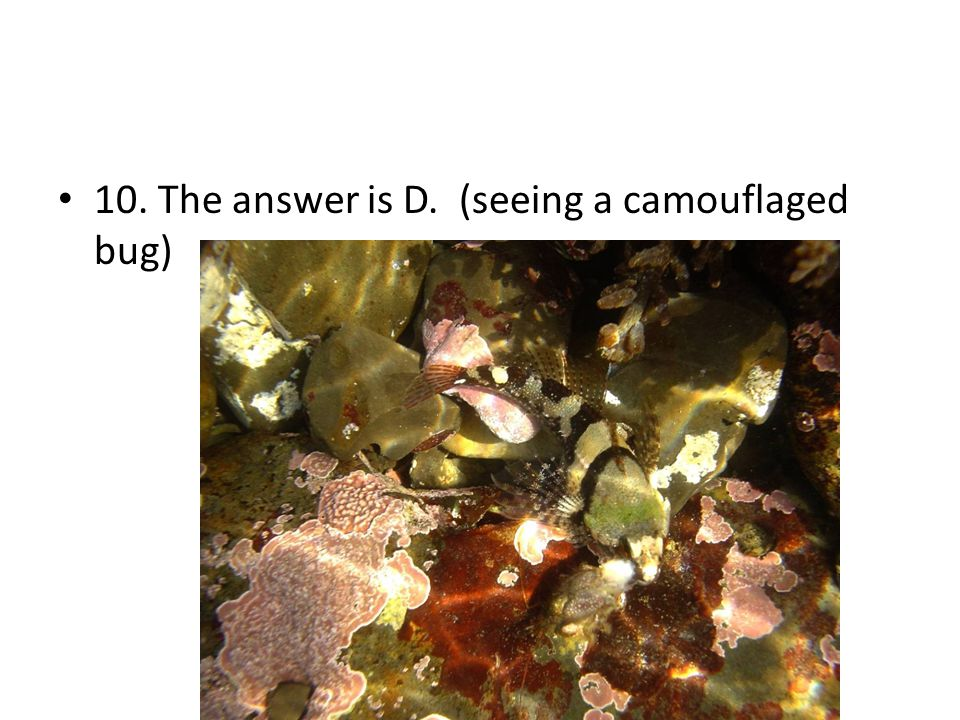 10. The answer is D. (seeing a camouflaged bug)