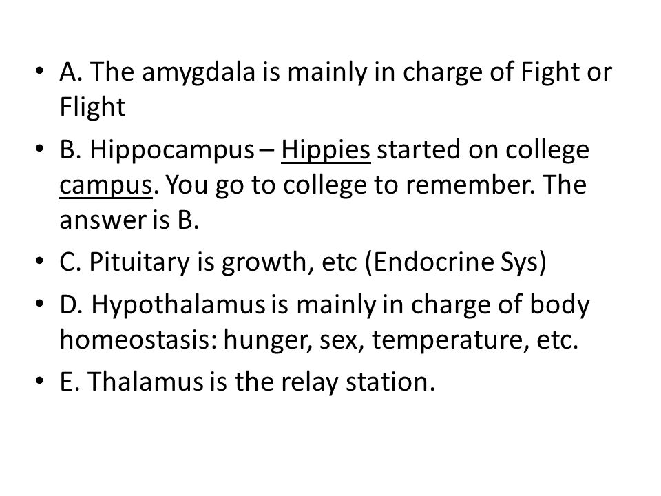 A. The amygdala is mainly in charge of Fight or Flight