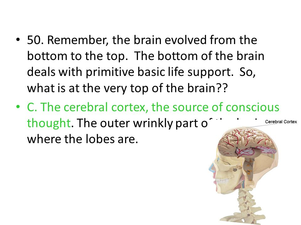 50. Remember, the brain evolved from the bottom to the top