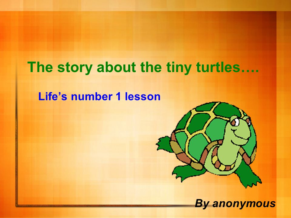 The story about the tiny turtles…. Life's number 1 lesson
