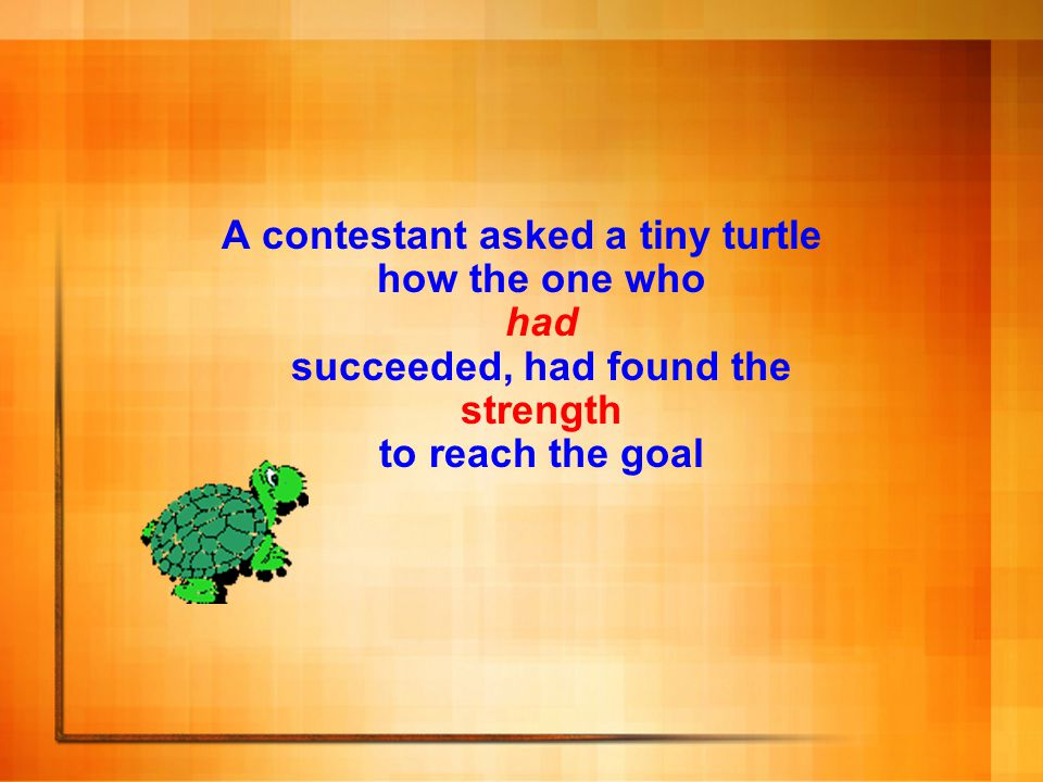 A contestant asked a tiny turtle how the one who had succeeded, had found the strength to reach the goal